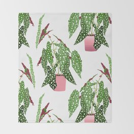 Simple Potted Polka Dot Begonia Plants in White Throw Blanket