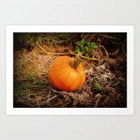 pumpkin Art Prints featuring Pumpkin by Amy Anderson