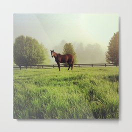 Morning Horse Metal Print