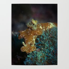 T-bar Nudibranch Poster