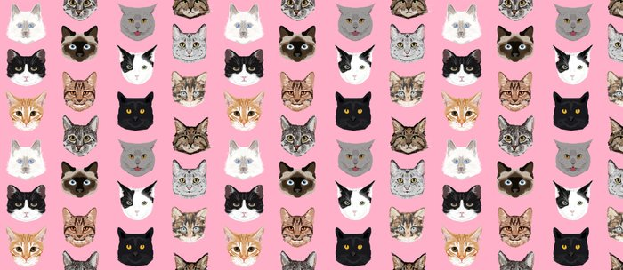 cute cat breed faces smiling kitten must have gifts for cat lady cat