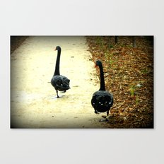 Synchronised Black Swans Canvas Print