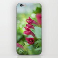 Tropical Pink iPhone & iPod Skin