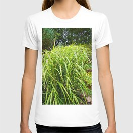 Zebra Grass T-shirt