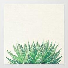 Lace Aloe Canvas Print