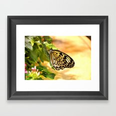 Briefly Beautiful Framed Art Print