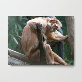 Monkey at Rest Metal Print