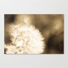 Dandelion Breeze Canvas Print