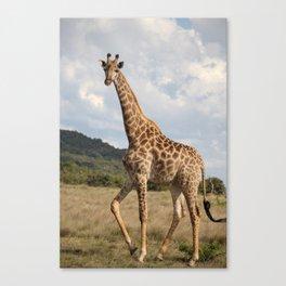 Giraffe_front Canvas Print