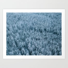 Winter pine forest aerial - Landscape Photography Art Print