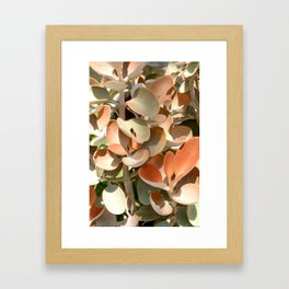 Succulent in hues of pink, orange and green.  Hot house plant Framed Art Print