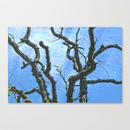 High Dynamic Range Tree Canvas Print