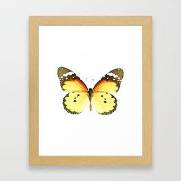 Danaus chrysippus Butterfly Framed Art Print