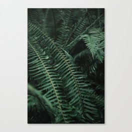 Forest Ferns Canvas Print