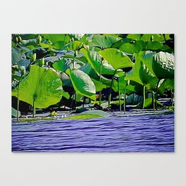 Lilly C. Pond Canvas Print