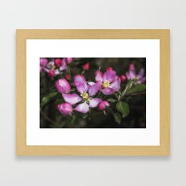 Pink Apple Blossoms Framed Art Print