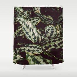Calathea Shower Curtain