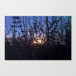 Denver Daze Canvas Print