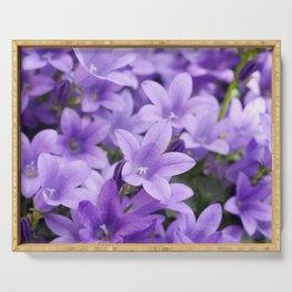 DREAMY - Purple flowers - Bellflower in the sun #1 Serving Tray