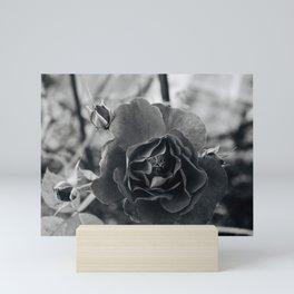 rose and buds Mini Art Print