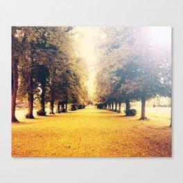 Golden Trees Canvas Print
