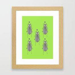 Tiger beetle 1 Framed Art Print