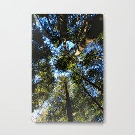 tree up shot Metal Print