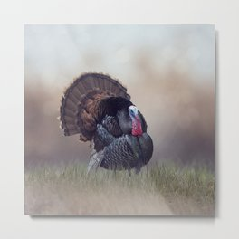 WIld Tom Turkey in the grassland Metal Print