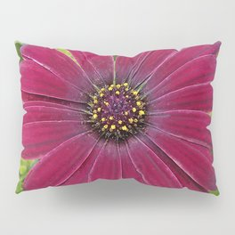 Deep red velvet African daisy -- Osteospermum flower Pillow Sham