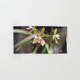 Butterfly Orchid - Encyclia tampensis 1 Hand & Bath Towel