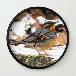 Male Varied Thrush Amid the Snow and Seed Wall Clock