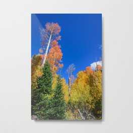 Autumn 6065 - Cedar Breaks/Brian Head, Utah Metal Print