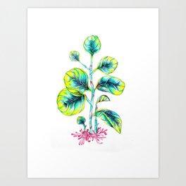 Peperomia Art Print