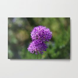Allium Metal Print