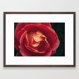 cls p rose Framed Art Print