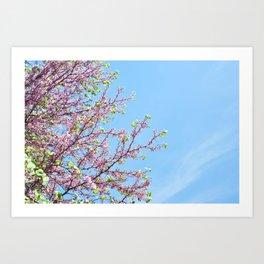 Blossoming Cercis siliquastrum or Judas tree Art Print