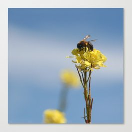 Honey bee on a wildflower Canvas Print