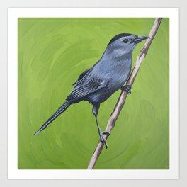 Grey Catbird Art Print