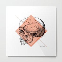 Anatomy Collection   Skull Metal Print
