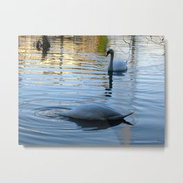 """DUCK"" said the swan! Metal Print"