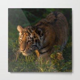 Tiger cub in the grass Metal Print