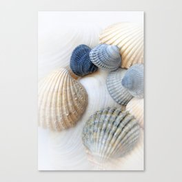 Just Sea Shells Canvas Print