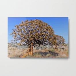 Quiver trees, Namibia Metal Print