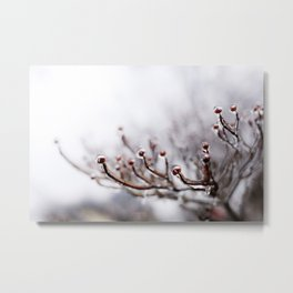 Icy Branches #2 Metal Print