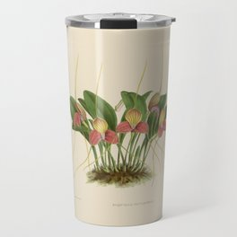 File:R. Warner & B.S. Williams - The Orchid Album - vol 01 - plate 005 Travel Mug