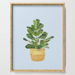 Fiddle Leaf Fig in a Basket- Ficus Lyrata Serving Tray