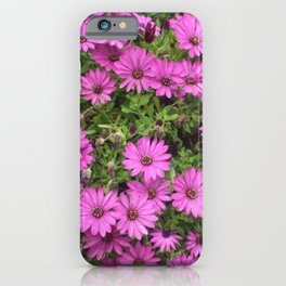 Beautiful Purple Cape Daisies iPhone Case