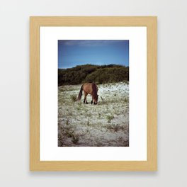 wild pony Framed Art Print