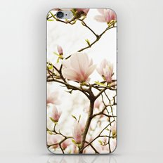 Queen For A Day Pink Magnolia Flower iPhone & iPod Skin