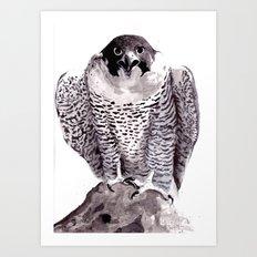 falcon 1 Art Print